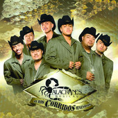 Alacranes Musical - Live in Concert